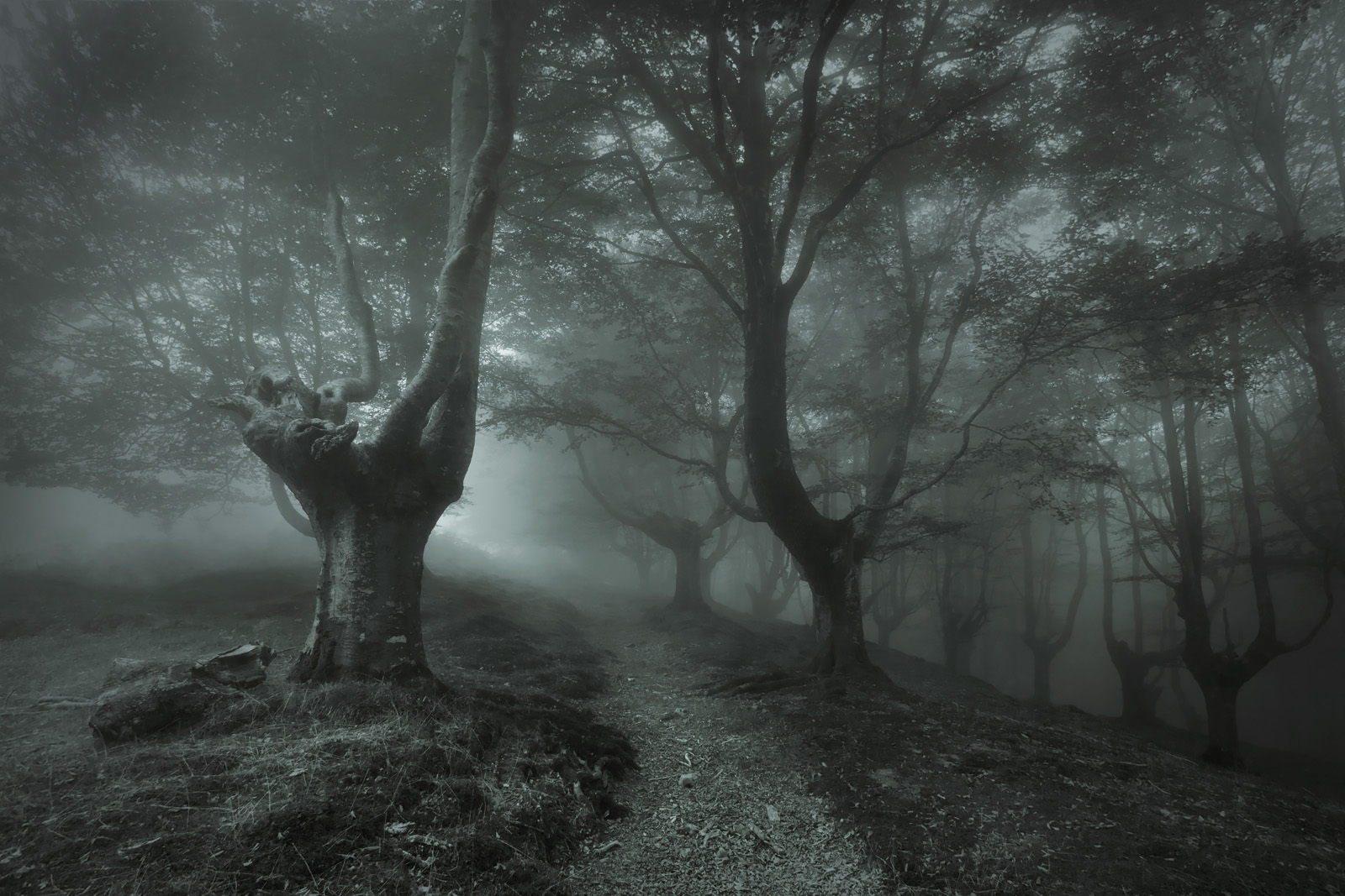 The_Enchanted_Forest_V_1600