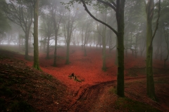 The_Enchanted_Forest_VI_1600
