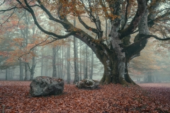 The_King_of_the_Forest_1600